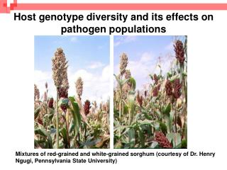 Host genotype diversity and its effects on pathogen populations