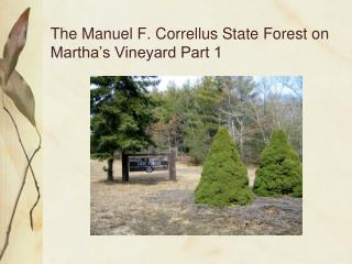 The Manuel F. Correllus State Forest on Martha s Vineyard Part 1