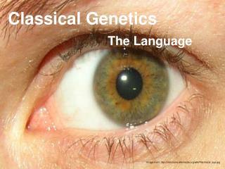 Classical Genetics