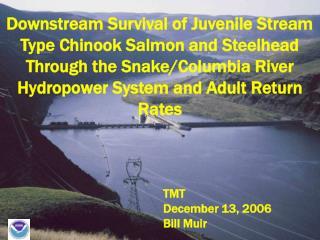 Downstream Survival of Juvenile Stream Type Chinook Salmon and Steelhead Through the Snake