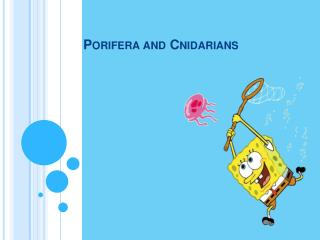 Porifera and Cnidarians