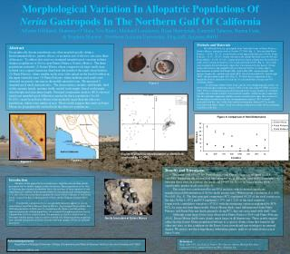 Morphological Variation In Allopatric Populations Of Nerita Gastropods In The Northern Gulf Of California Allison Gillil