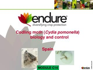 Codling moth Cydia pomonella biology and control  Spain