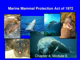 Marine Mammal Protection Act of 1972