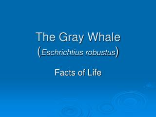 The Gray Whale Eschrichtius robustus
