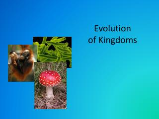 Evolution of Kingdoms