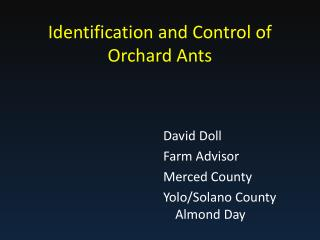 Identification and Control of Orchard Ants