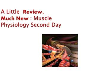 a little  review,  much new : muscle physiology second day