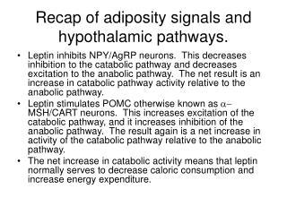 Recap of adiposity signals and hypothalamic pathways.