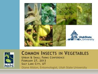 Common Insects in Vegetables Urban  Small Farms Conference February 27, 2013 Salt Lake City, UT