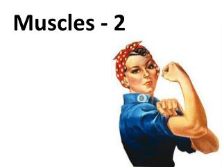 Muscles - 2