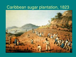 Caribbean sugar plantation, 1823