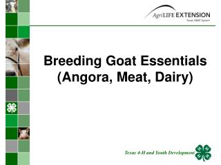 Breeding Goat Essentials Angora, Meat, Dairy