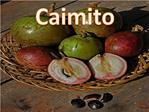 Caimito