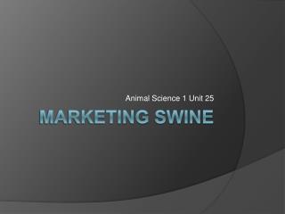 Marketing Swine