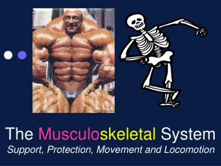 The Musculoskeletal System Support, Protection, Movement and Locomotion