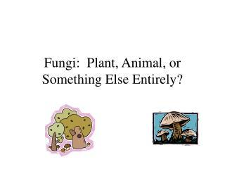 Fungi:  Plant, Animal, or Something Else Entirely