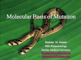 Molecular Basis of Mutation