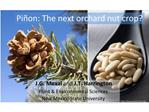Pi on: The next orchard nut crop