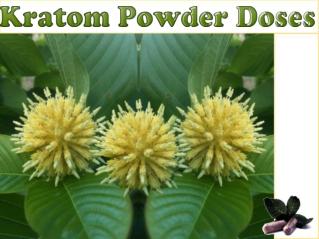 Kratom Powder Doses