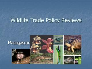 Wildlife Trade Policy Reviews
