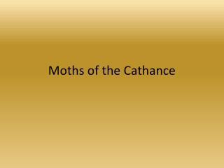 Moths of the Cathance