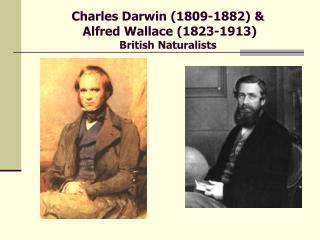 Charles Darwin 1809-1882   Alfred Wallace 1823-1913 British Naturalists