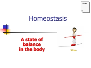 homeostasis and body temperature control
