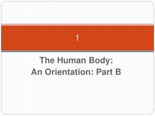The Human Body:  An Orientation: Part B