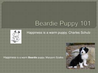 Beardie Puppy 101