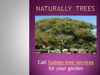 Call Sydney tree services for your garden