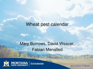 Wheat pest calendar
