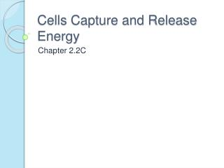 Cells Capture and Release Energy