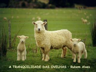 A TRANQ ILIDADE DAS OVELHAS   Rubem Alves