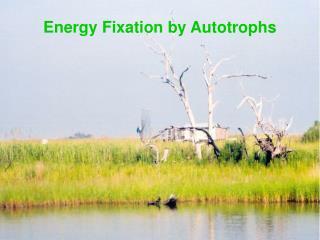 Energy Fixation by Autotrophs