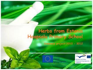 Herbs from Estonia Haapsalu Primary School