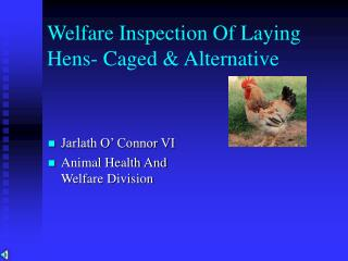 Welfare of Laying Hens