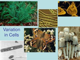 Variation  in Cells