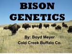 bison genetics