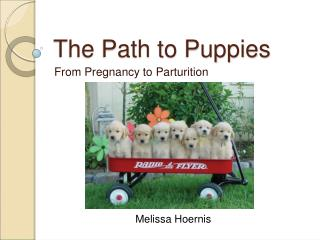 The Path to Puppies