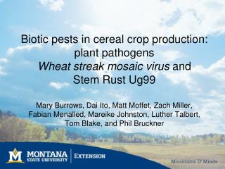 Biotic pests in cereal crop production: plant pathogens Wheat streak mosaic virus and  Stem Rust Ug99