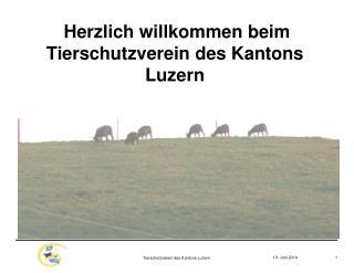 Herzlich willkommen beim Tierschutzverein des Kantons Luzern