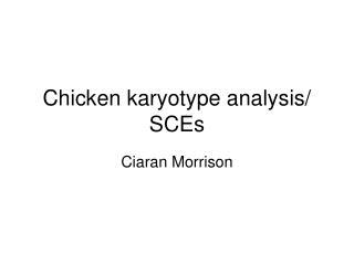 Chicken karyotype analysis
