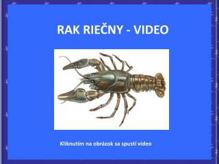 RAK RIECNY - VIDEO
