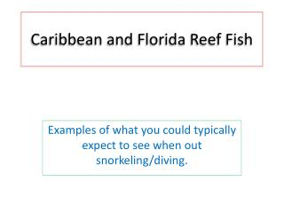 Caribbean and Florida Reef Fish
