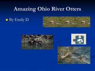 Amazing Ohio River Otters