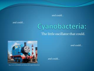Cyanobacteria: