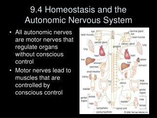 9.4 Homeostasis and the Autonomic Nervous System