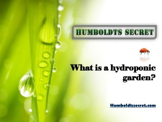 What is a hydroponic garden?