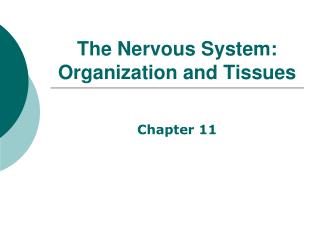 The Nervous System:  Organization and Tissues